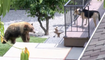 Un chien chasse un ours de sa propriété à Bradbury en Californie