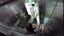 Mujer es trolleada con abejas asesinas en un ascensor