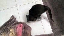 Ce chat se coince la tête dans une boîte de mouchoirs...