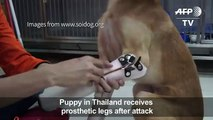 Puppy receives prosthetic ws after attack