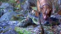 Le maître laisse son pitbull aller jouer dans l'eau. Puis il est complètement pris par surprise quand le chien sort cet