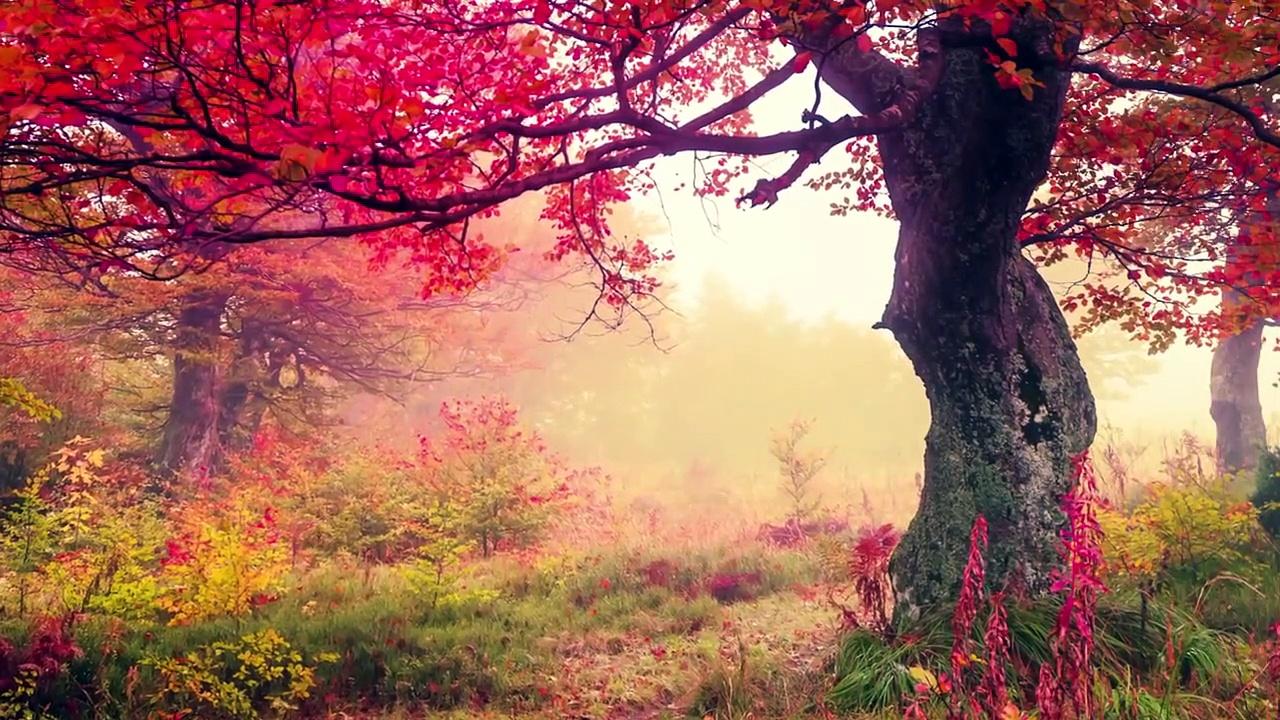 Beautiful Romantic Music: Relaxing Music, Guitar Music, Violin Music, Cello Music, Piano Music ★103 part 2/4