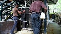 L'éléphanteau de Singapour fête son premier anniversaire
