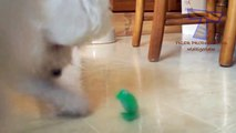 Animals are so funny they should be called funnymals - Funny animal compilation_3