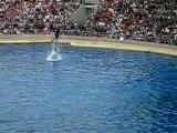 2 dauphins du marineland