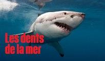 15 requins blancs nagent près des côtes californiennes