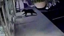 Les petits oursons aussi se prennent des vitres et en ont honte