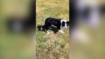 Un chien joue à 1,2,3 soleil avec sa maîtresse !