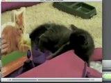 Cat vs Cat Book (2008)