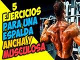 Como Sacar y Tener una Espalda Ancha Masa Muscular En Forma de V 5 Ejercicios Para Los Dorsales