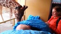 La façon dont cette girafe dit adieu à son soigneur atteint d'un cancer va vous fendre le coeur!