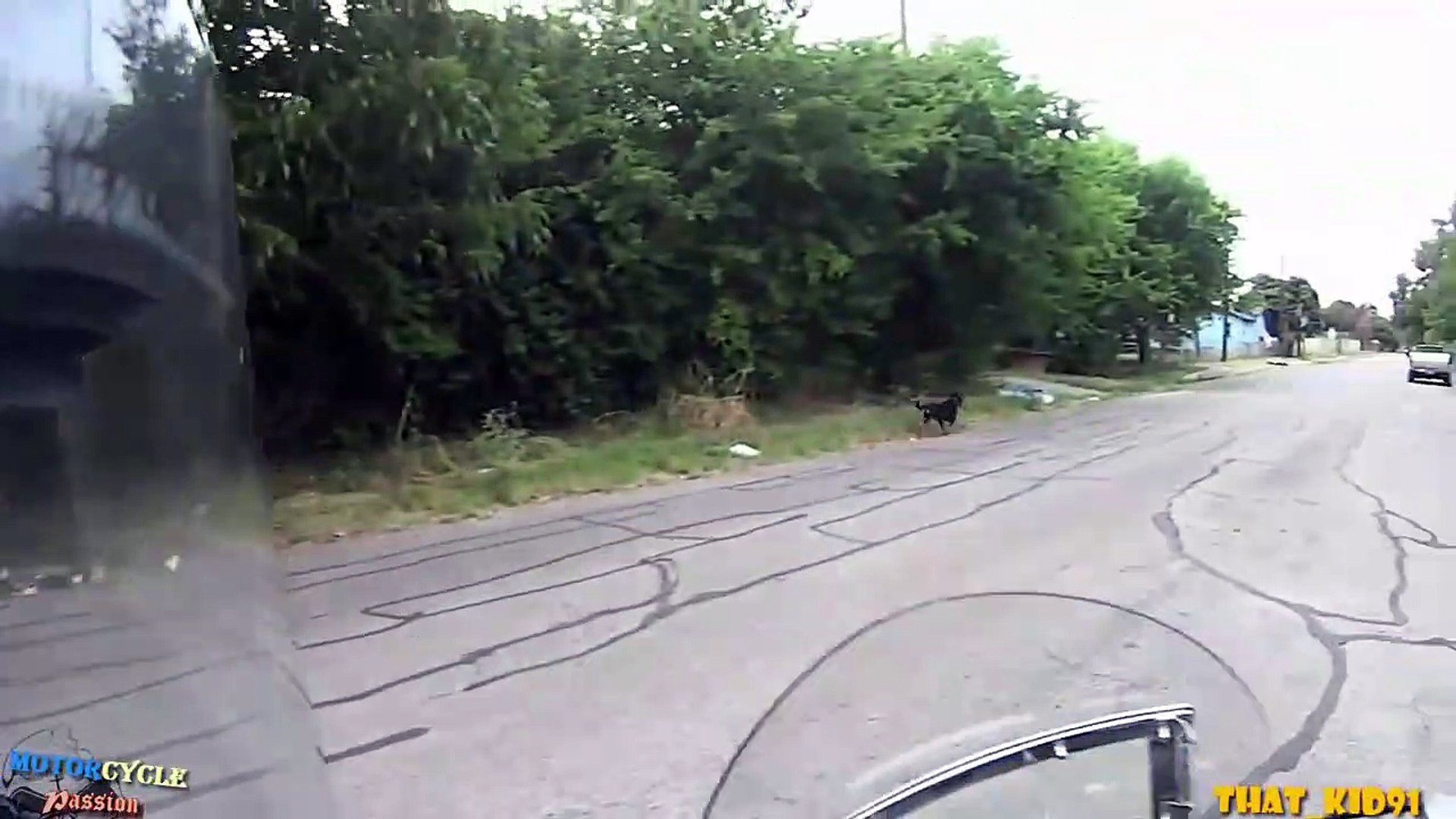 Dogs Attack Mo Poor Dogs & Motorcyclist Rescues