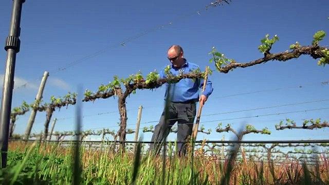 Climate change battle heats up for Australian winemakersasd
