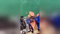 Ce taré saute sur un requin et se fait mordre... Débile