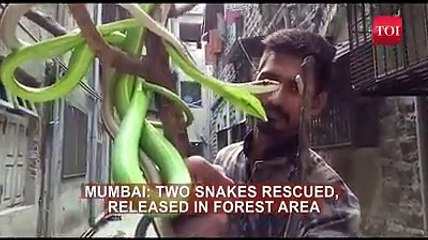 green snake top 10 muslim bollywood actors who adopted hindu screen names top 10 lists the top top list popular tops best top top ranking top 10 top 10 list bollywood hero bollywood actors indian actors celeb news celebrity celebrity news
