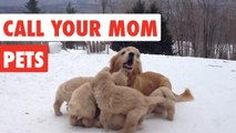 Call Your Mom | Mother's Day Pet Video Compilation 2017