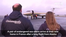 Endangered sea otters fly into Fre