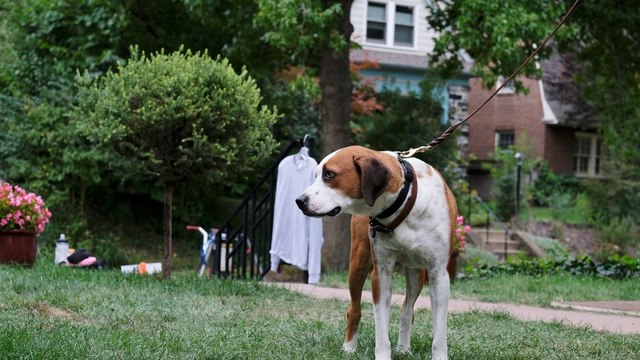 Downward Dog ~ Season 1 Episode 2 ~ EngSub -- {s01e02}