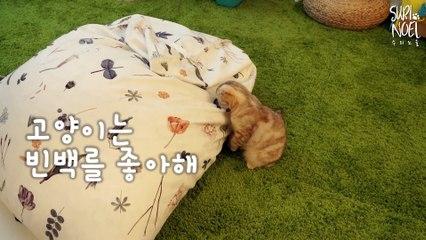 Cats Love Beanbag feat. Heart Attack -심쿵주의- 고양이는 빈백을 좋아해