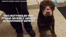 Dog found in Detroit with nose, ears chopped off-pApX5H-kSMY