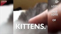 Magical box releases kittens, kittens, and more kittens-DnQz1SDdAAM