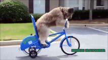 Funny Animals Cats & Dogs, Amazing Pets Agility & Talent Compilation, Best #1 hour Cute Pet Moments_63