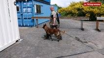 Lann-Bihoué : 42 chiens passent leur brevet