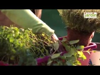 Planter une jardinière d'aromatiques