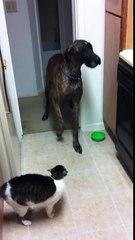 Confira a reação hilária do cão quando ele tenta passar pelo gato...Agora eu não consigo parar de rir!