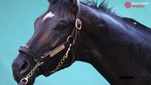 Always Dreaming chases immortality at Preakness