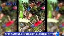 Warga Mamuju Tangkap Ular Piton Sepanjang 6 Meter