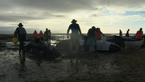 Heartbreaking images emerge of mass stranding of over 400 whales