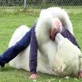 L'amour inconditionnel entre l'Homme et l'animal