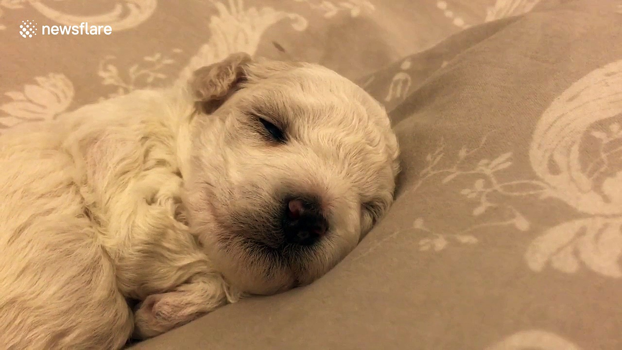 Just a two-week-old puppy sleeping