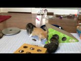 Adorable 6-Week-Old Kittens Play in Their Room