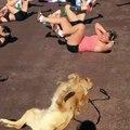 Un chien imite des femmes qui font de l'exercice