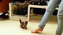 Ela começa a bater os pés no ritmo da música, e a gatinha responde da forma mais fofa do mundo…MDS!!