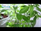 염증을 없애주는 식물 [광화문의 아침] 4회 20150611
