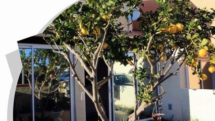 A vendre - Maison/villa - Canet en roussillon (66140) - 4 pièces - 94m²