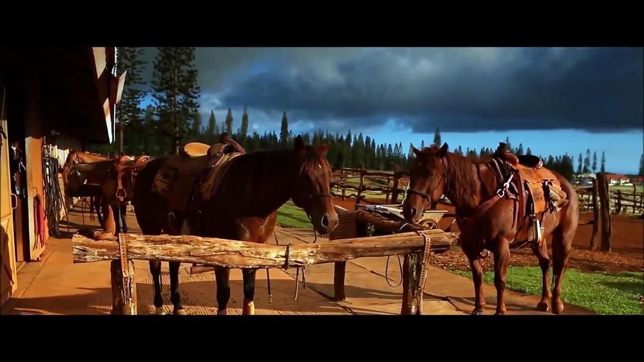 Horses for Kids – Drone Horses Vio –