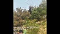 Sauvetage d'une chèvre suspendue à une ligne téléphonique
