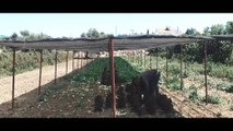 Califorian KKTC Reklam - Kıbrıs Genç TV
