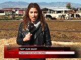 Süt Elde Kaldı - Kıbrıs Genç TV Haber Merkezi - (24.02.2016)