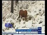 غرفة الأخبار | إسبانيا تشهد أول تساقط كثيف للثلوج هذا الشتاء