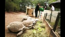 "RUBRIQUE DECOUVERTE ""VILLAGE DES TORTUES"" - Pr : BINTOU - 22 Mai 2017 dans MORNING KING"