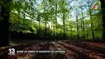 Nature : à la découverte des arbres