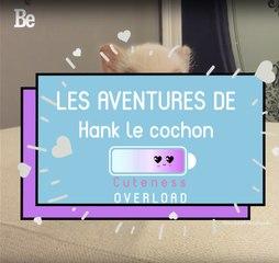 """Cuteness Overload : Hank le """"mini"""" cochon ;)"""
