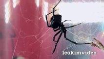 Killer Spider Vs Killer Ants The Ultimate Bug Battle   -V