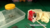 Redback Spider Egg Sac Whats Inside Is SCARY-ExrWLJiK