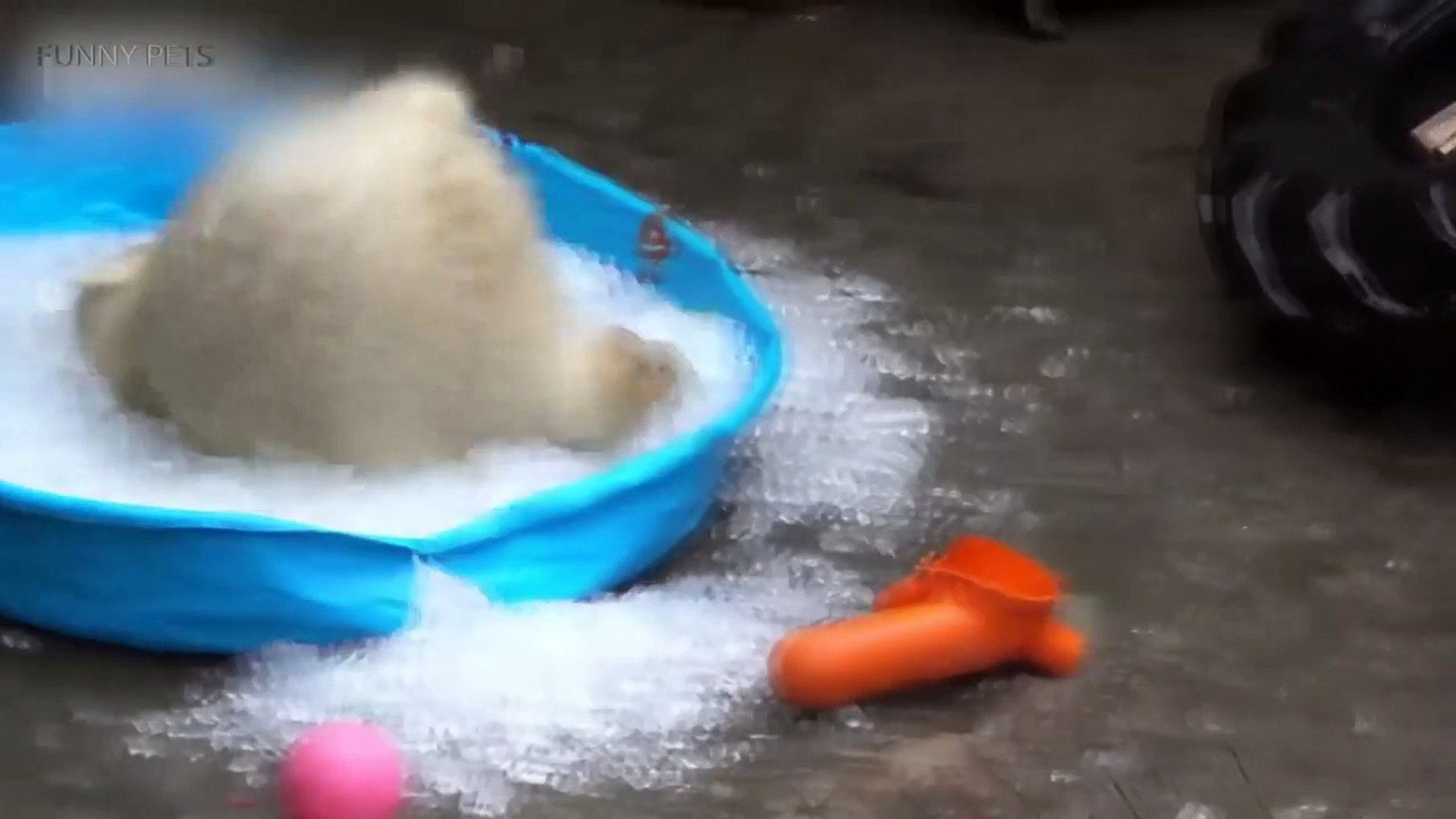 Cute Bear Cubs  Funny Baby Bears Playing [Funny Pets]